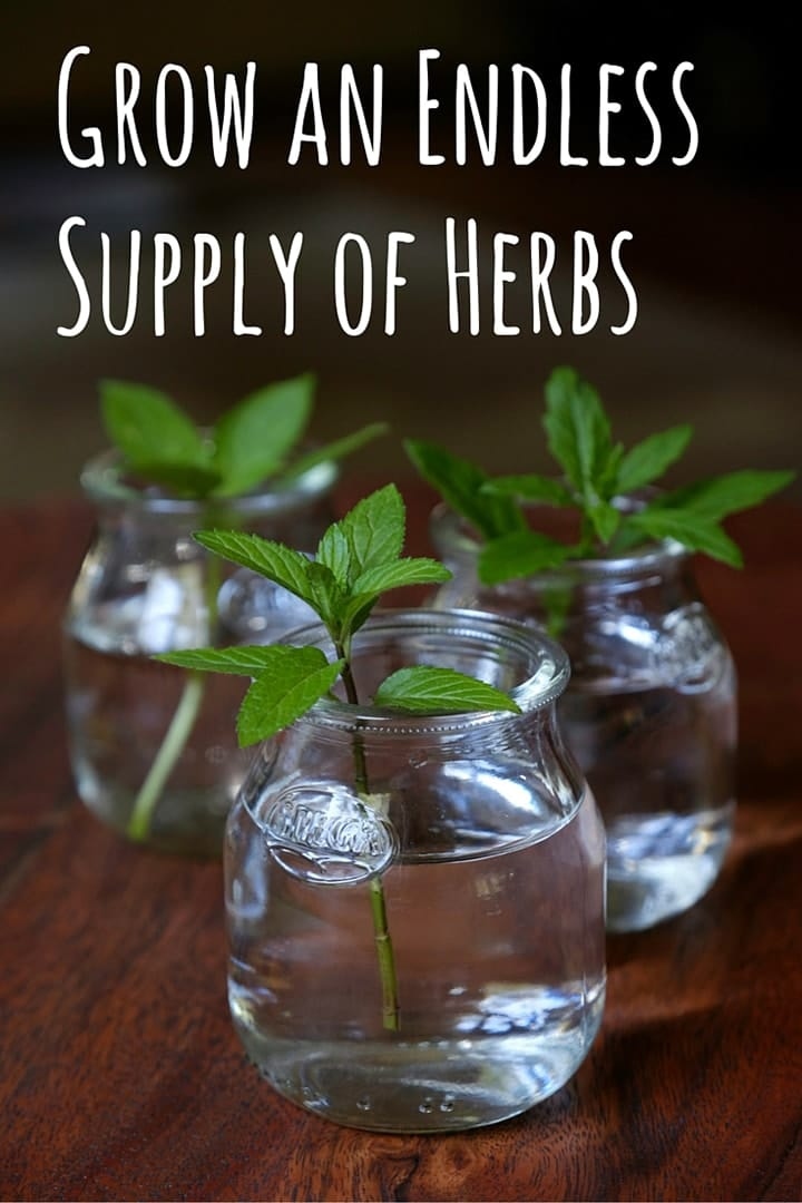 herbs-from-cuttings-10