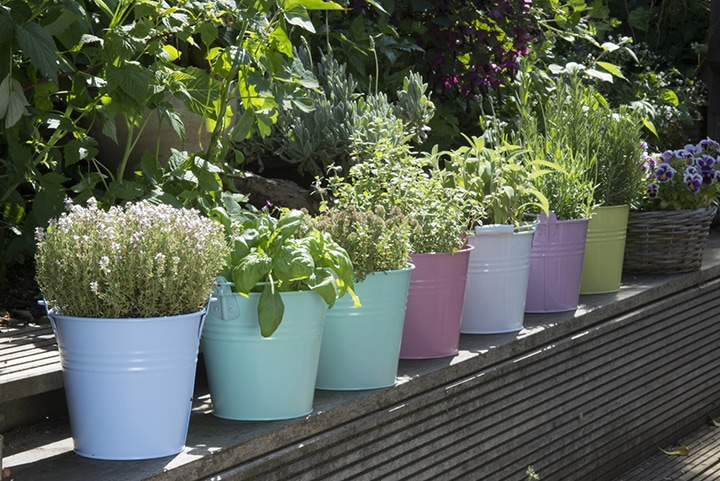 herbs-from-cuttings-7