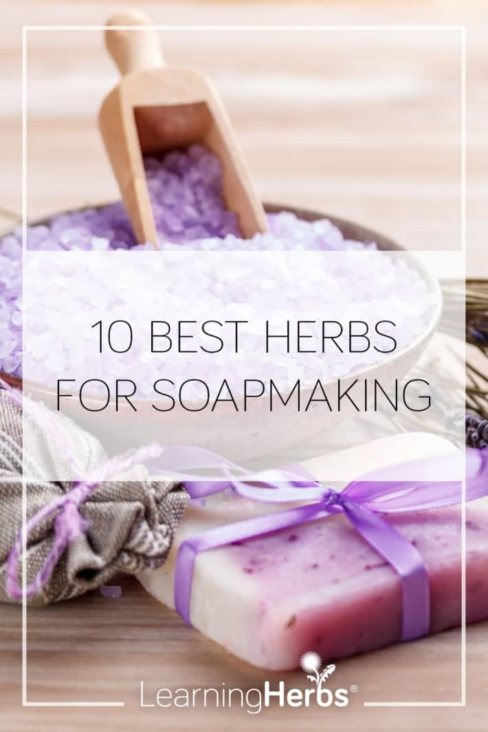 10 Best Herbs for Soapmaking and How to Make Chamomile Soap